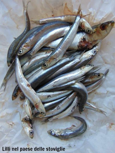 pasta, primi, pesce, acciughe, finocchietto, erbe, uvetta, pinoli, frutta secca, regionale